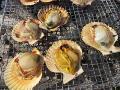 緋扇貝(天草食の祭典)