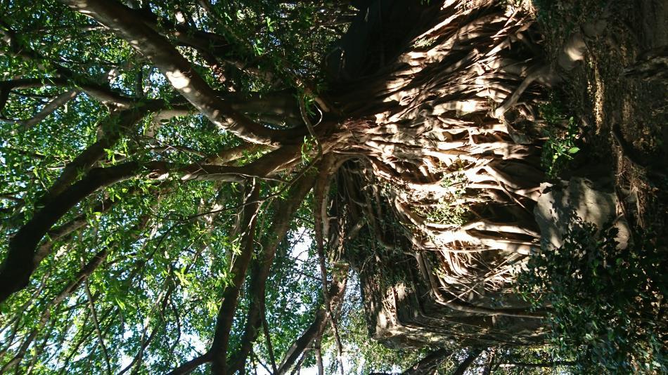 椿公園天草のラピュタ